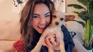 i rescued 2 dogs in one month! *meet my new dog*