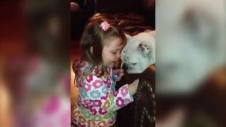 Little Girl Paints Bulldog's Toenails