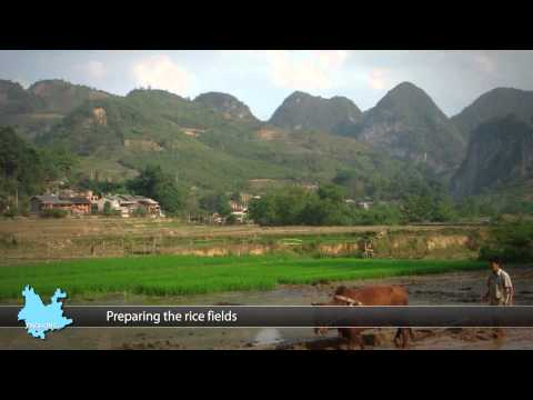 Focus Asia - Travel & Tours - Yunnan
