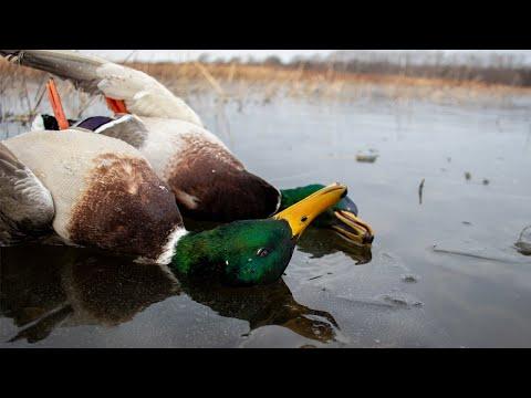 Icy Mallards   Public Land Walk-In Duck Hunt