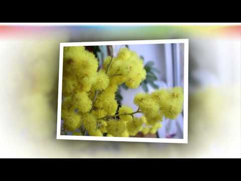 Поздравления с 1 мая и открытки с Днем весны, мира