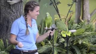 Amazon parrots Molly and Gabby