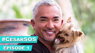 Cesar Millan Helps Missy Elliott with Her Over Excited Dogs #CesarSOS
