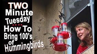 How to Make Hummingbird Food and attract them to your home, garden,...
