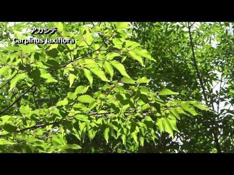 2013夏空と木々・秋元園芸