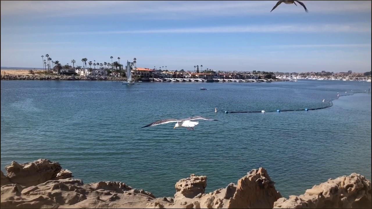 Biển Long Beach CALIFORNIA một buổi chiều nắng đẹp 🤗