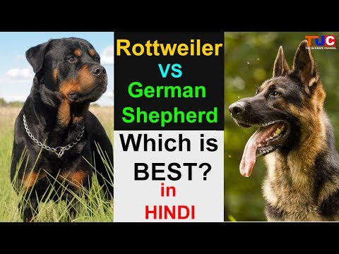 Rottweiler VS German Shepherd : Which is Best For You? in hindi : TUC