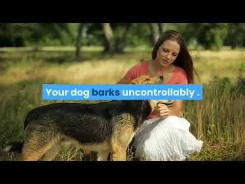 how-to-train-dog-to-stop-barking---how-to-make-your-dog-stop-barking