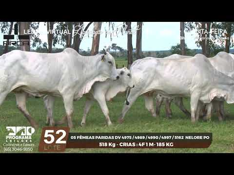 LOTE 52