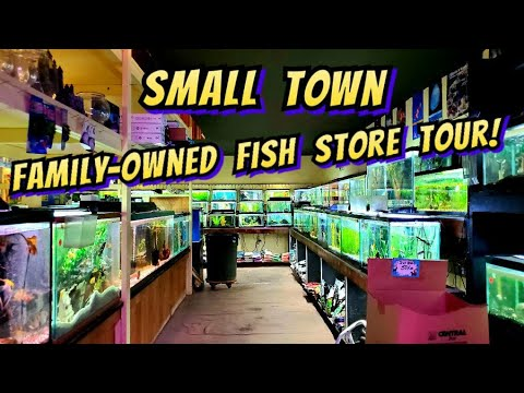 Running A Family Owned Local Fish Store In A Small Town... During A Lockdown. City Zoo Pet Center.