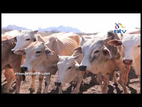 Drought in Marsabit: Pastoralist communities feel government interventions not enough