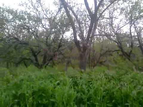 8000 sq.m. land in Bulgaria, small house, near river Danube