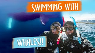 SNORKELLING with HUMPBACK WHALES in Iceland 😱😍