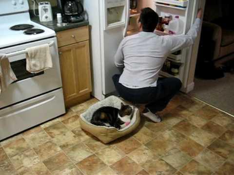 free kittens tucson