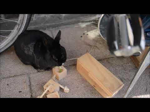 Konijnen Orry en Pepa spelen met houten intelligentiespel