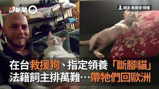 在台灣救援狗、指定領養「斷腳貓」 法籍飼主排萬難帶回歐洲|法國人|寵物|缺陷