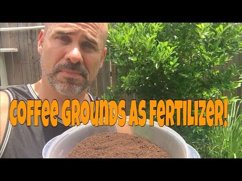 Why Use Coffee Grounds As Fertilizer?
