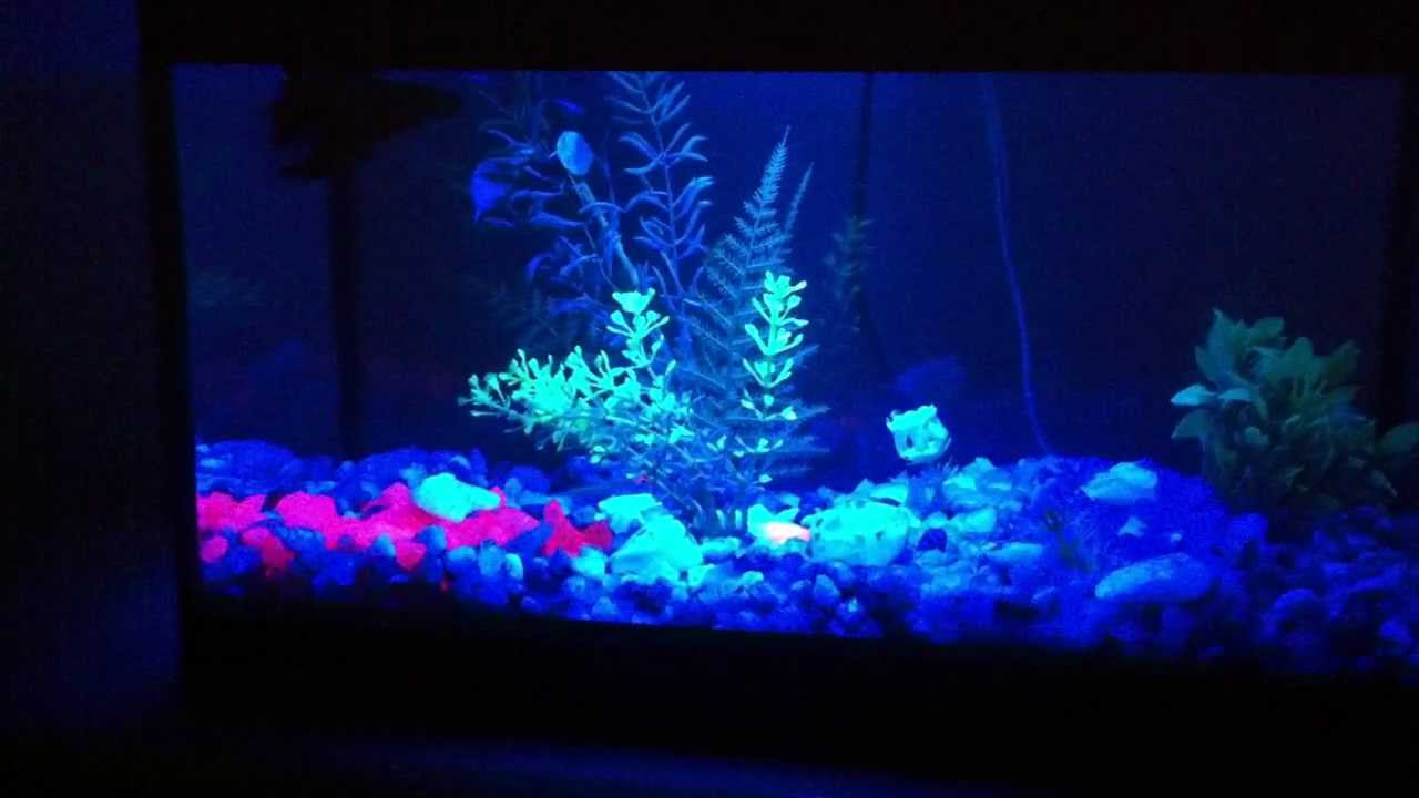 Blue Light Aquarium Lamp Led Azul P Aqu 225 Rio Youtube
