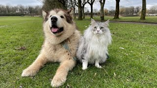What?? A Dog Walking A Cat?? What's The Worst That Could Happen...