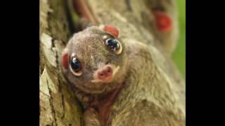 Самые удивительные животные мира