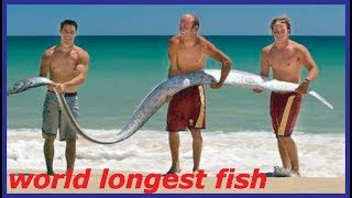 WORLD LONGEST FISH ! THE LONGEST FISH IN THE WORLD, GIANT OARFISH