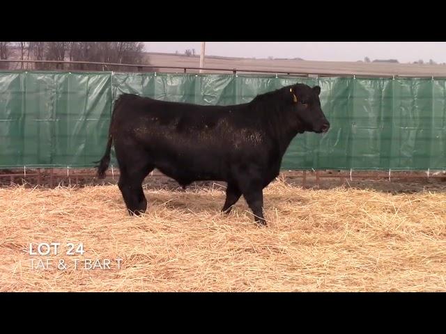 Taliaferro Angus \u0026 T Bar T Angus Ranch - 24