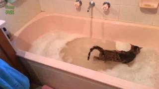 Как помыть кота?
