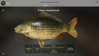 Русская рыбалка 4 Russian fishing 4 Озеро Янтарное Трофейный Карп Чешуйчатый закрыт
