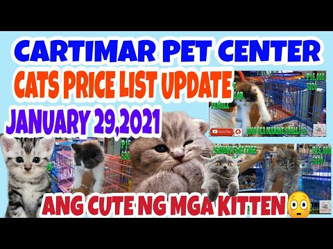 CARTIMAR PETSHOP MANILA PHILIPPINES CATS FOR SALE W/BREED AND PRICE UPDATE 01-30-21.vlog#137