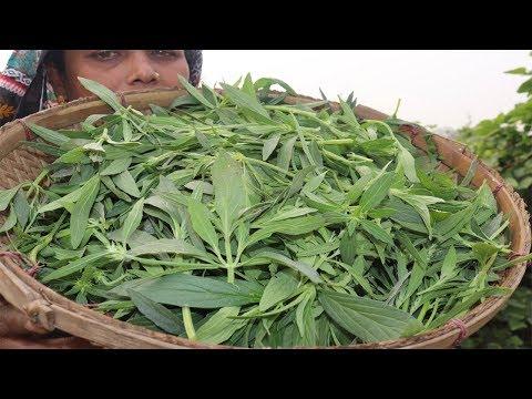 Village Food Farm Fresh winter vegetable fry recipe village style Fresh Kan Shisha Shak Vorta Recipe