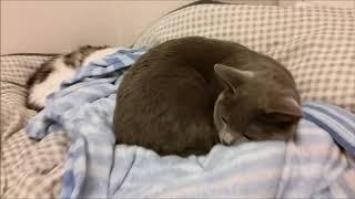 前半は、ふとん占領してる猫たちを飼い主の目線から撮った映像です。 後...