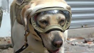 Frida the rescue dog emerges as a Mexico quake hero