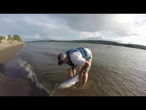 Columbia River Salmon Fishing -July Fishing 2016