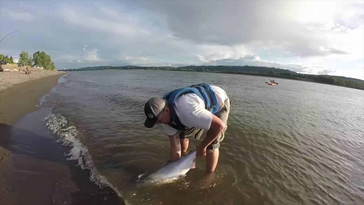 Columbia river salmon fishing july fishing 2016 youtube for Columbia river fish counts