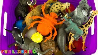 Learn Wild Animals For Kids with Box of Toy Animals Learn Colors