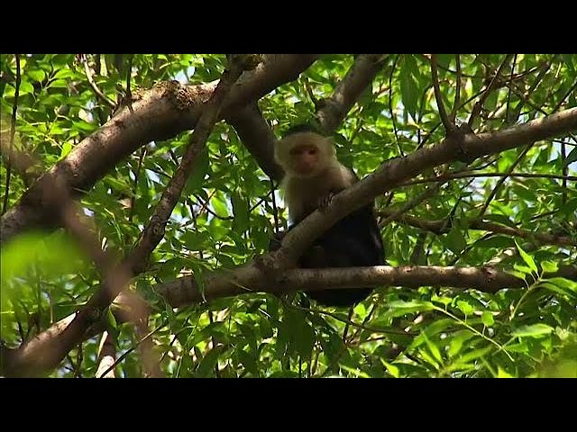 Monkey in Mexico City escapes from private home, eludes capture