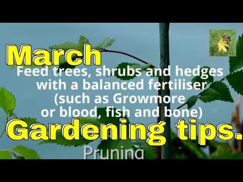 Gardening tips March - roses hedges fruit gardens