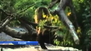 На Дальнем Востоке  медведи напали на двух женщин