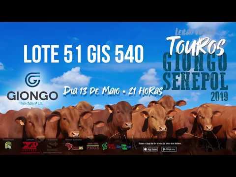 LOTE 51 GIS 540