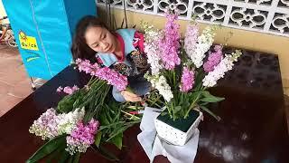 Cắm hoa- Cắm hoa phi yến để bàn- hướng dẫn cắm hoa