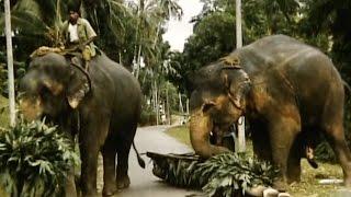 Ceylon 1955 Reel 8 of 24