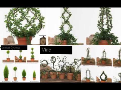 Fresh Topiary Trees & Plants, Animal Topiary Forms and More! - YouTube