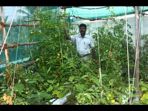 Terrace garden chennai july 2016 doovi for Terrace garden in india