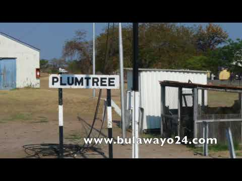 Plumtree, Tsholotsho war erupts on WhatsApp - WARNING vulgar language