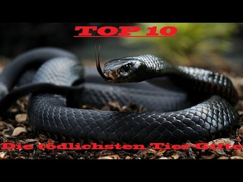 Top 10 - Die tödlichsten Tier-Gifte National Geographic, 2012