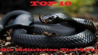 Top 10 - Die tödlichsten Tier-Gifte (National Geographic, 2012)