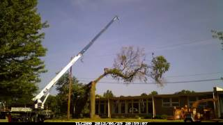 American Elm Tree Removal Livonia Michigan.mp4
