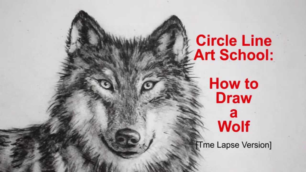 How To Draw A Wolf: Step By Step