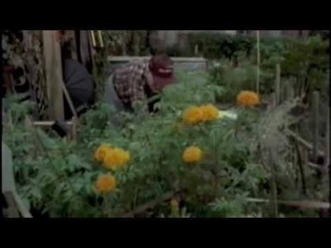 Urban Gardening (Part 1)