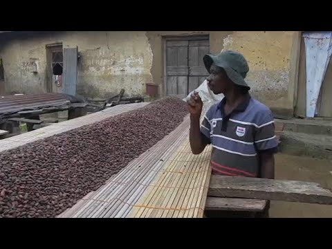 France 24:Ivory Coast and Ghana suspend sales of cocoa